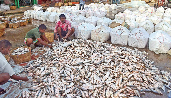 Fishermen are busy sorting out hilsa in Fisheryghat area of Chattogram on Friday after return with huge hilsa they netted in the Bay of Bengal. – Star Mail