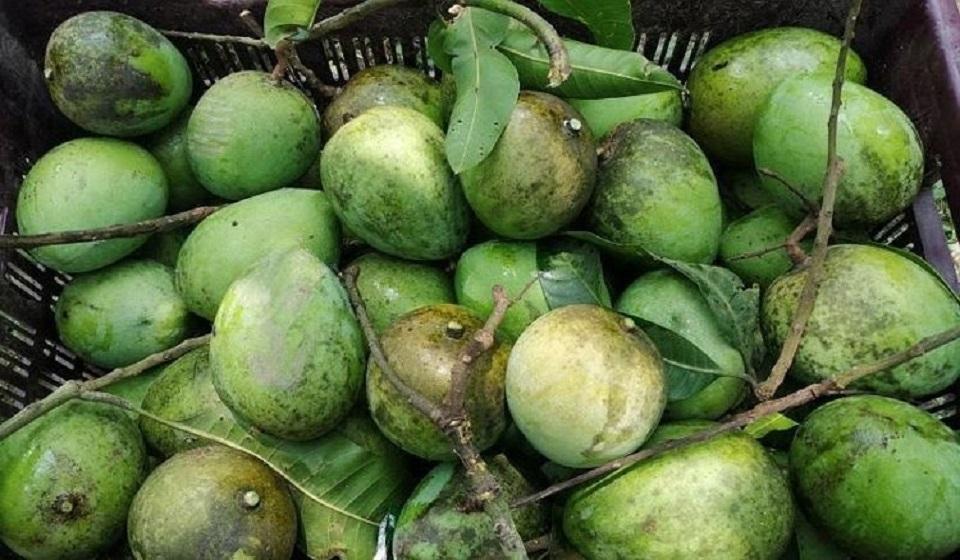 Mango add around Tk 87-cr in Rajshahi's economy