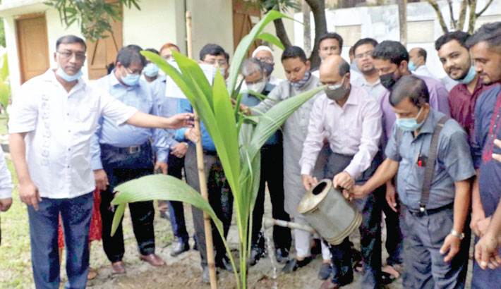 DUET vice-chancellor Prof Dr Md Habibur Rahman along with other senior officials plants a sapling on the occasion of Prime Minister Sheikh Hasina's 75th birthday on the university campus in Gazipur on Tuesday.
