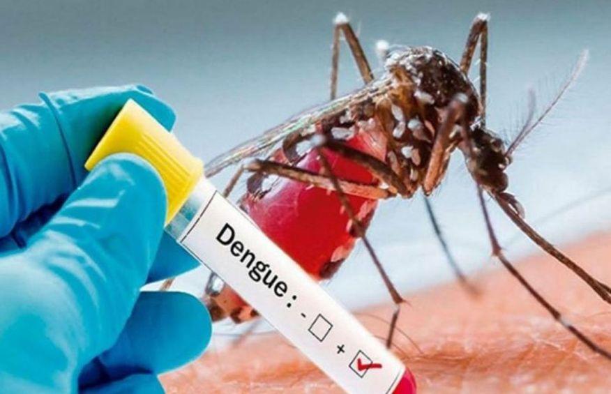 Dengue fever: 2 patients die, 217 hospitalised in 24 hours