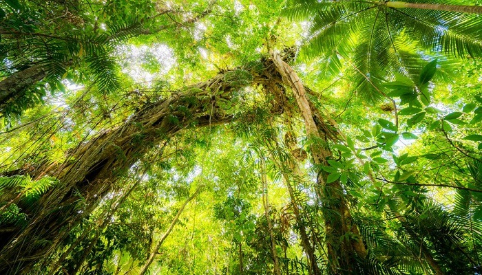 Daintree: World Heritage rainforest handed back to Aboriginal owners