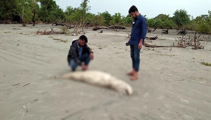 Dead Dolphin washes ashore on Kuakata beach again
