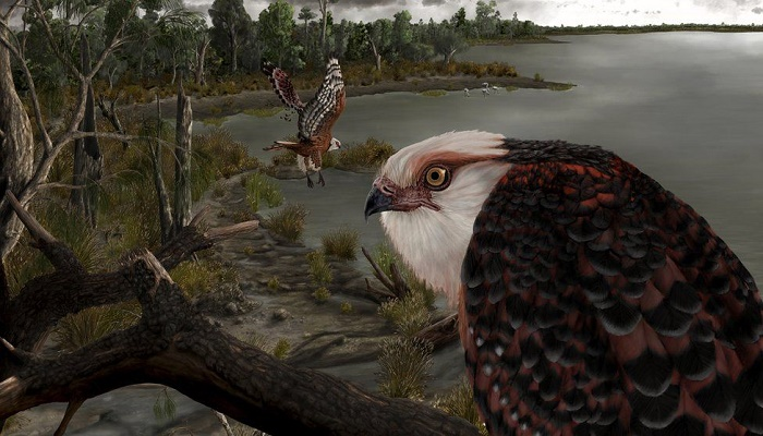 Australian researchers uncover fossil of new eagle species
