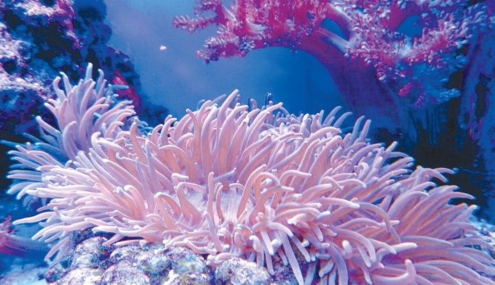 Scientists race to save Florida coral reef from 'disease'