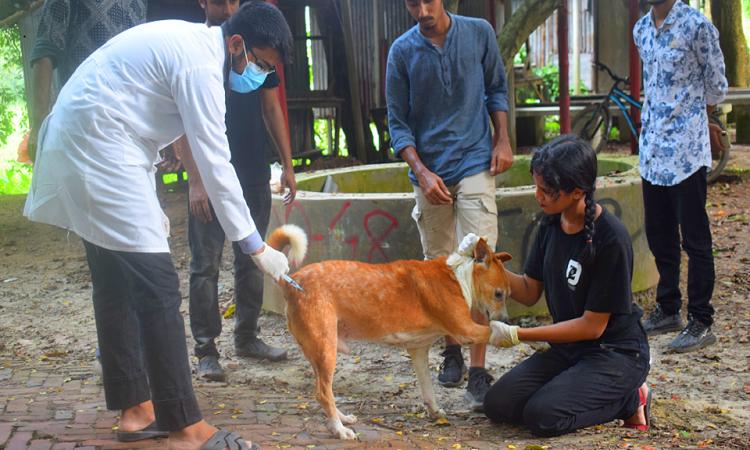 Dog neutering campaign held at JU