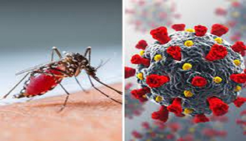 How to differentiate between  dengue and COVID-19 fever?