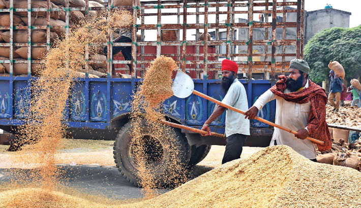 Labourers use shovels to separate wheat grains from the husk at a wholesale grain market in Amritsar of India's Punjab province on Friday. —AFP Photo