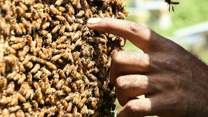 Kashmir beekeepers head southward for warmth, honey and cash