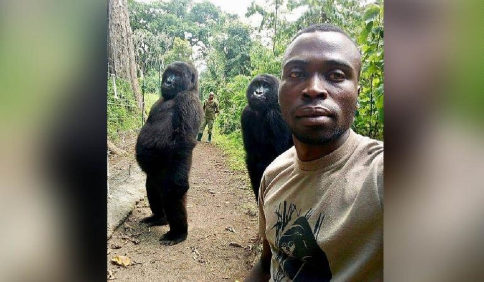 Ndakasi, beloved mountain gorilla whose photobomb went viral, dies aged 14
