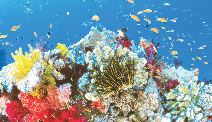 Global warming kills 14pc of world's corals in a decade