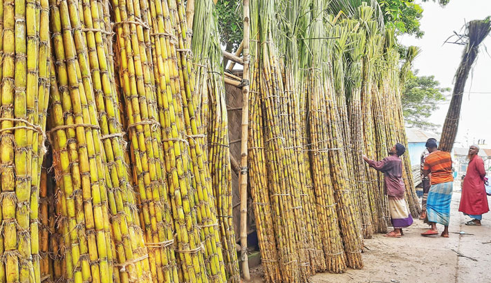 Wholesalers pile up sugarcane for sale at Boro Bazar in Khulna. The district witnesses bumper production of the crop this year. The photo was taken on Sunday. – Star Mail
