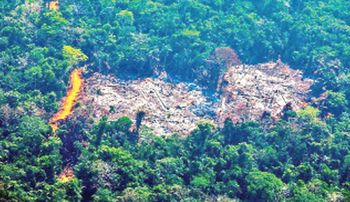 Biodiversity loss risks 'ecological meltdown'