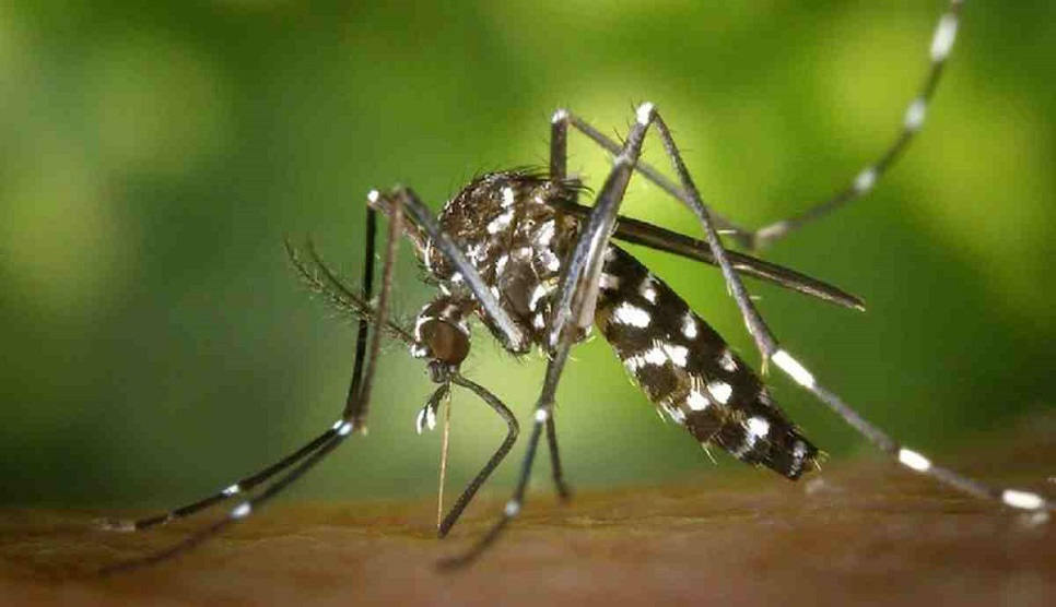Dengue infection: 2 more lives lost, 182 more hospitalised