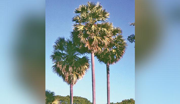 Palm trees to minimise lightning impacts