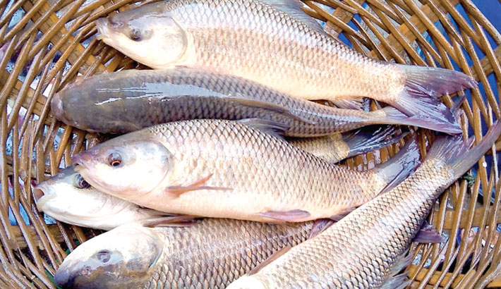 First vaccine for fish developed in country