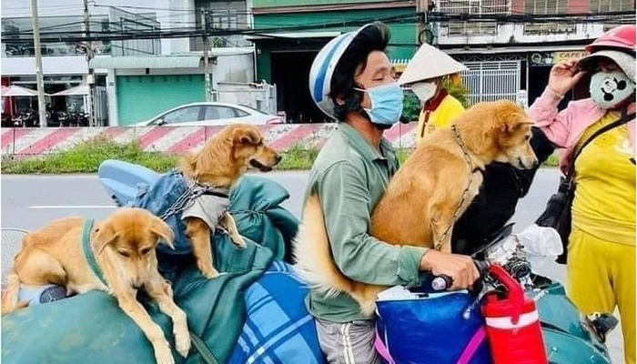 Vietnam: Owners heartbroken after 12 dogs killed over Covid