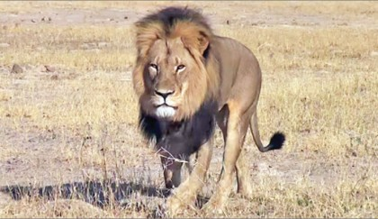<p>Pair in court over Cecil lion killing</p>