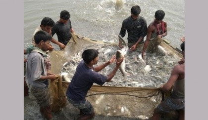 <p>ID cards prepared for 2,333 fishermen in Gaibandha</p>