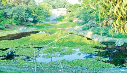<p>Dyeing factory waste poses health hazard to villagers</p>