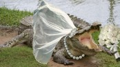 Mexican town performs annual 'crocodile wedding' ceremony