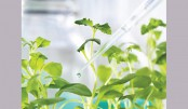<p>Scientists develop bomb-proof plants</p>