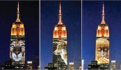 <p>Cecil the lion lights up Empire State building</p>