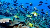 Qatar coral reef at risk from warming seas