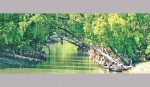 <p>The Sundarbans adventure</p>