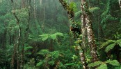 Tropical forests in trouble