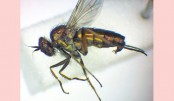 <p>&lsquo;Extinct&rsquo; fly found in nature reserve</p>