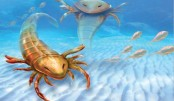 <p>460m-yr-old bizarre &lsquo;sea scorpion&rsquo; fossil discovered</p>