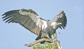 <p>Feeding station installed to protect endangered vulture</p>