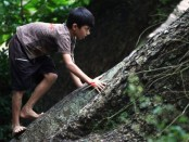 Want to improve working memory? Climb a tree!