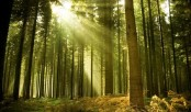 Earth's trees number 'three trillion'