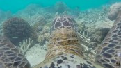 Turtle captures stunning underwater video of Great Barrier Reef!