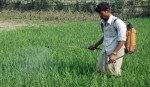 <p>Use of toxic chemicals rampant in farming</p>